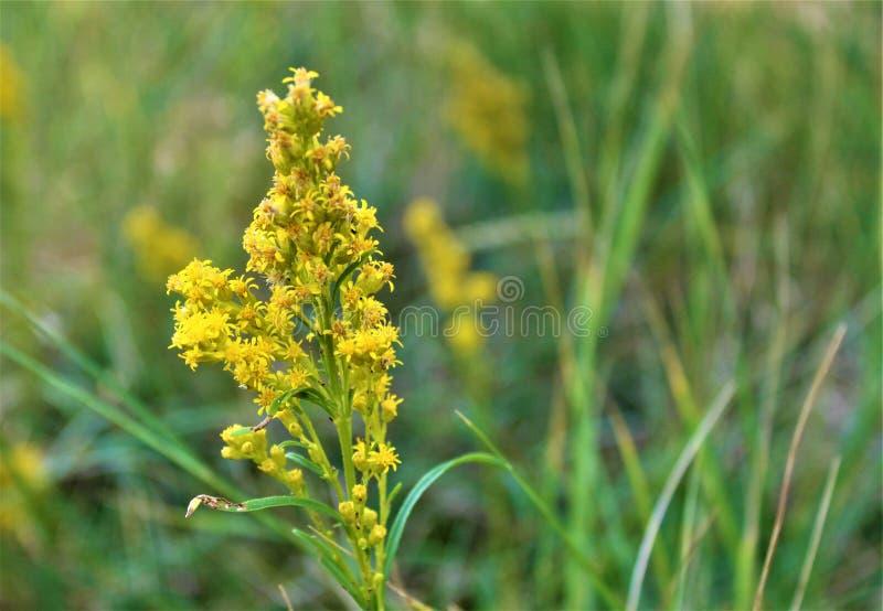 Siga el camino amarillo de la flor imagenes de archivo