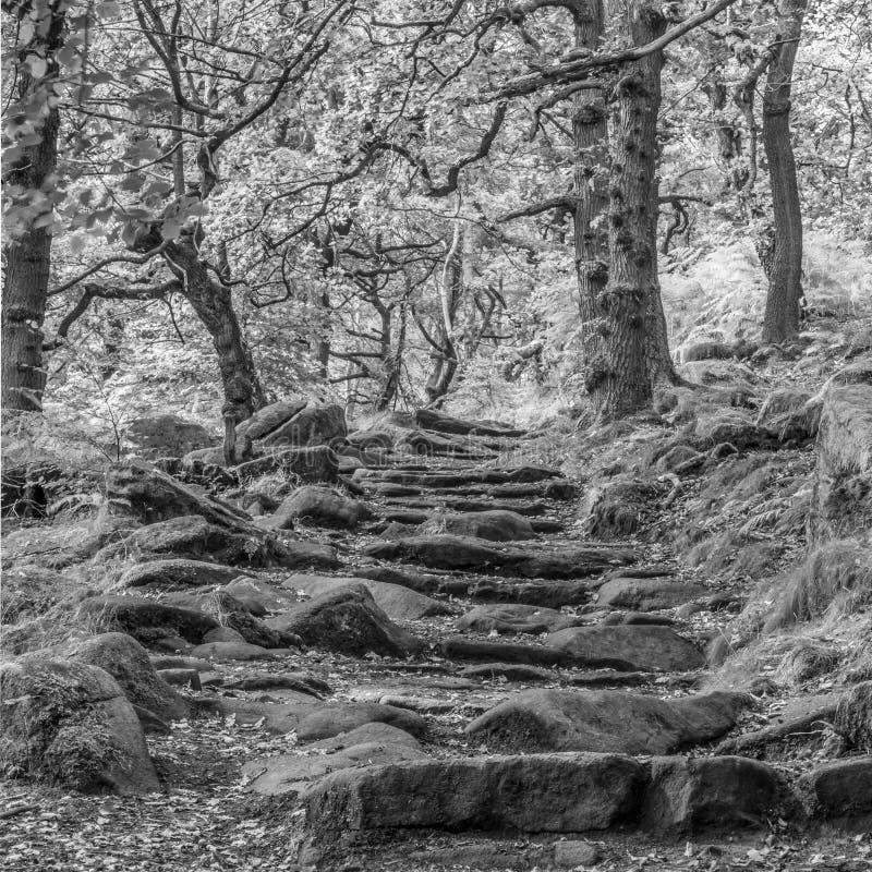 Siga los pasos rocosos a través del bosque imágenes de archivo libres de regalías