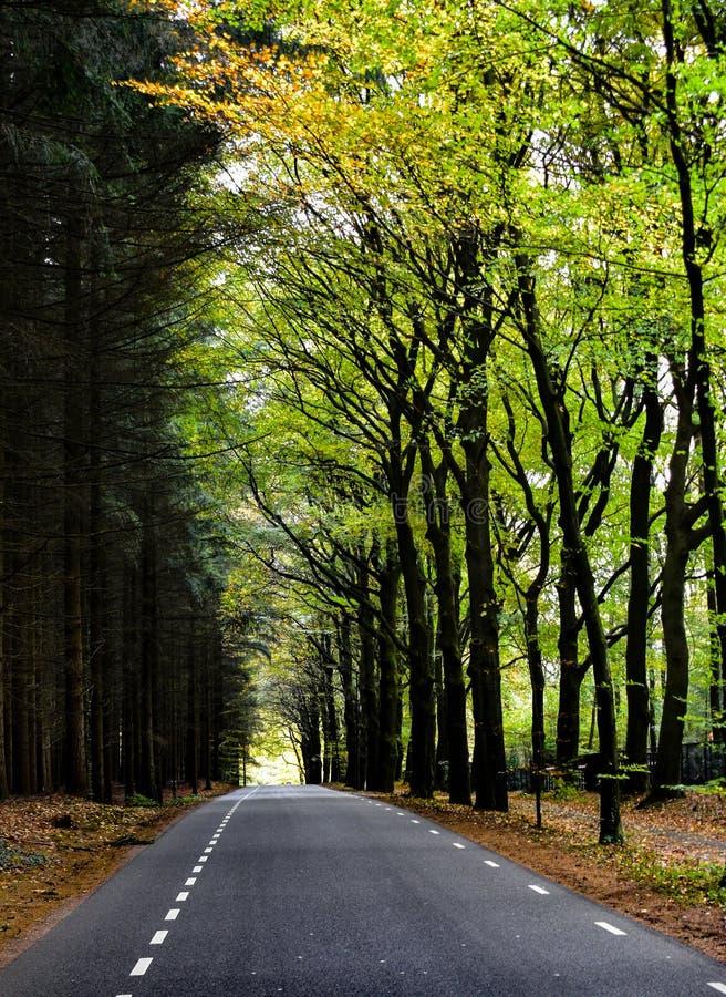 Siga sua própria estrada através da floresta foto de stock royalty free