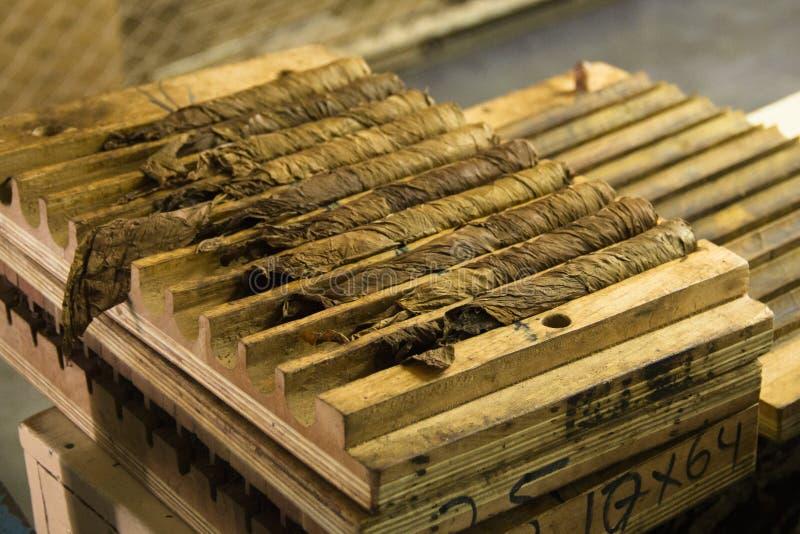 Sigaren tijdens het productieproces royalty-vrije stock afbeelding
