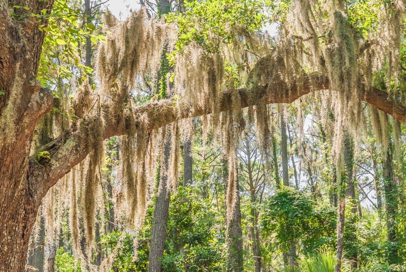 Sight på Hilton Head Island, SC fotografering för bildbyråer