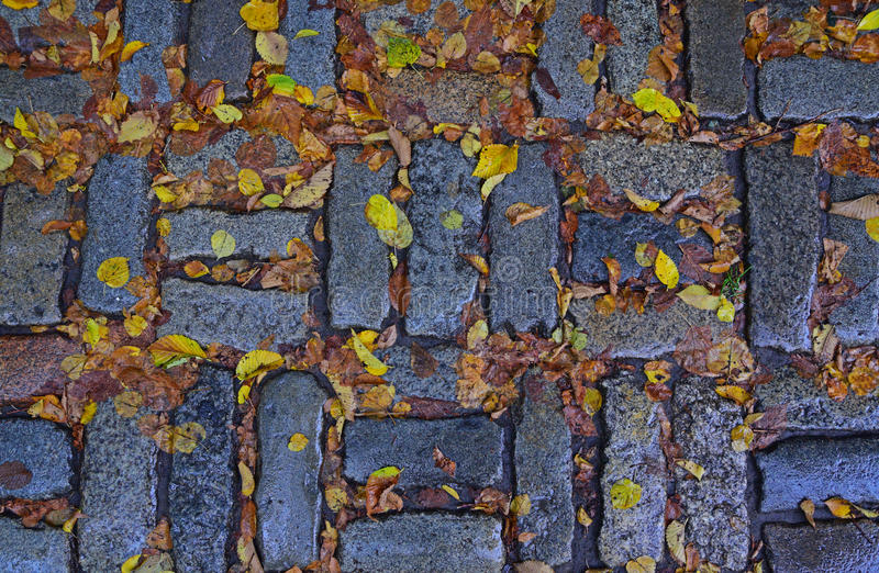 Sign of Autumn with fallen yellow leaves. On brick stone ground outdoor and occasional wet rainy days stock photo