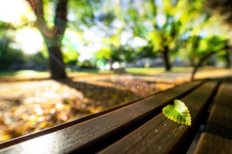 Sign of the fall season. Fallen green leaf alone on the bench under sunlight in the park. royalty free stock images