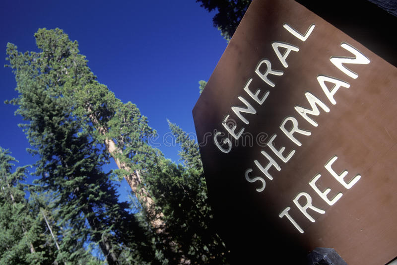 Download Sign For General Sherman Tree Stock Image - Image: 26261027