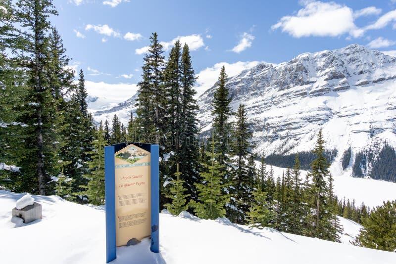 Peyto Glacier Overlook Sign royalty free stock photos