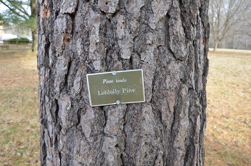 Sign on loblolly pine tree and brown tree bark on trunk royalty free stock images