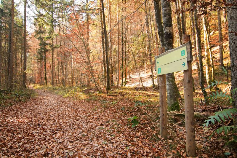 Sign post in the woods, both directions, two way stock image