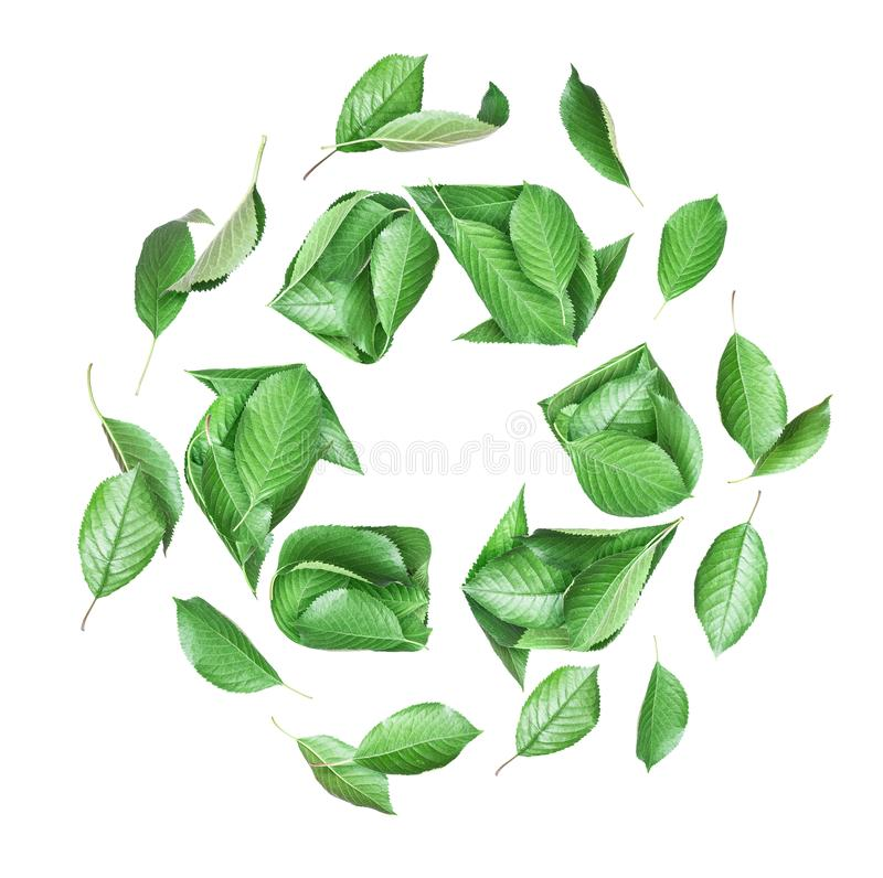 Sign of recycling made of fresh green leaves, conceptual image on white background stock photo