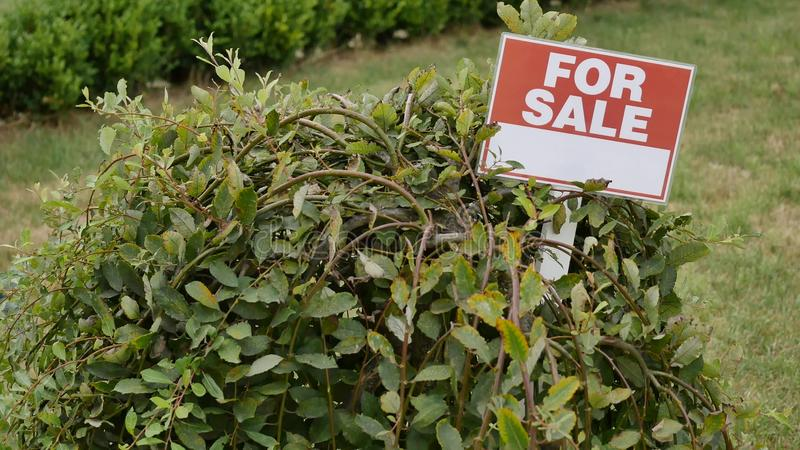 Sign `For sale` on the tree.  royalty free stock images