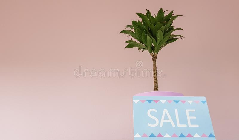 Sign on a shelf with the inscription discount on a background of a pale pink wall with a green plant in a women`s clothing store. Selling nameplates. Discount stock photos