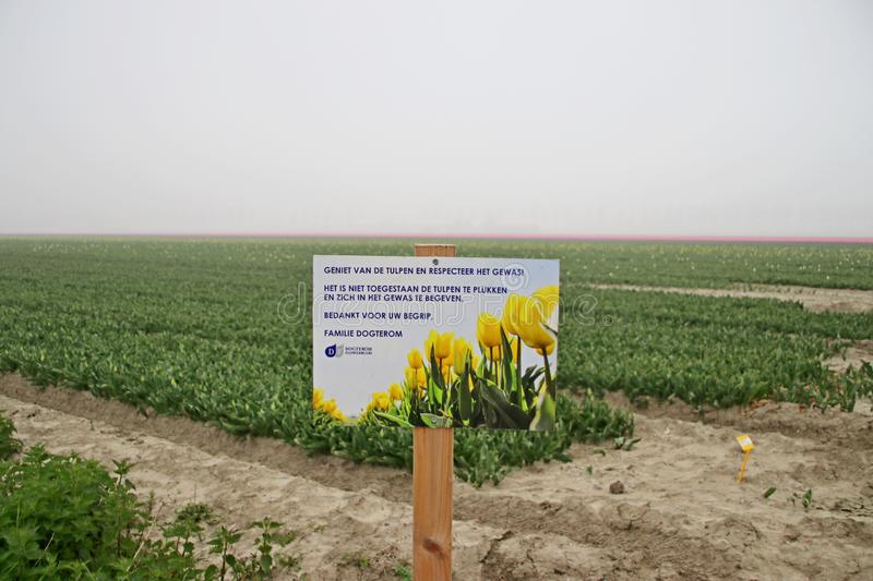 Sign to ask to stay out the tulips in rows on  a flowerbulb field in Nieuwe-Tonge in the netherlands during springtime season and. Fog royalty free stock photography