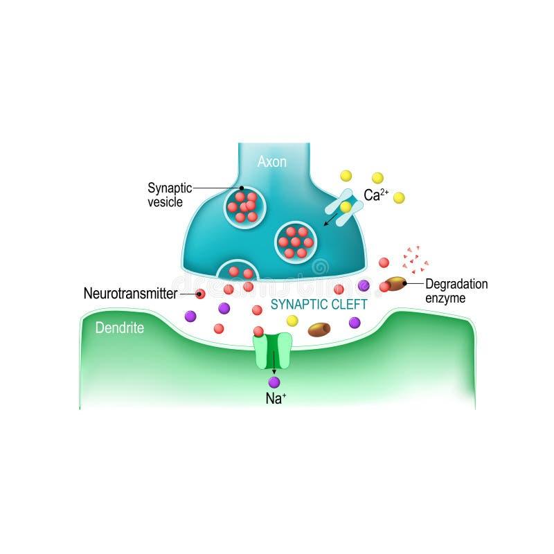 Signaaltransmissie bij een chemische synaps royalty-vrije illustratie