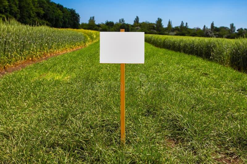Signe vide dedans une clairi?re avec l'herbe fra?che photo stock