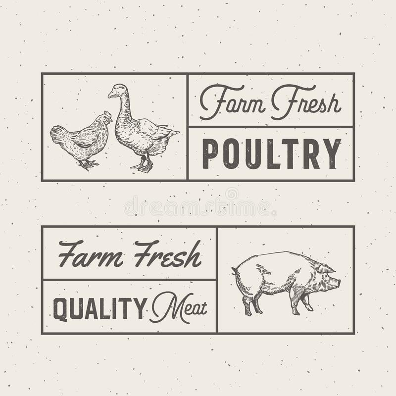 Signes frais de vecteur de volaille et de viande de ferme, symboles ou Logo Templates abstraits Poulet tiré par la main de gravur illustration libre de droits
