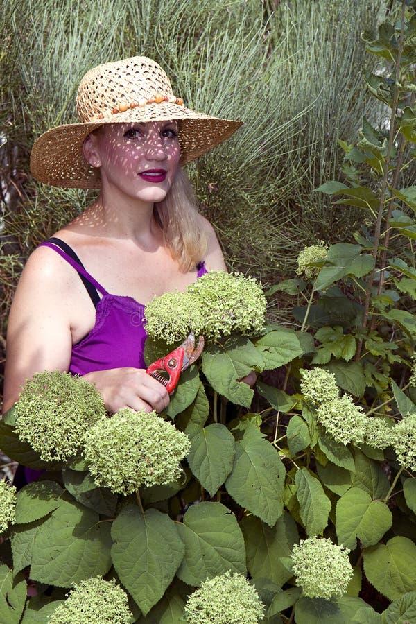Signora & Hydrangeas verdi fotografie stock libere da diritti