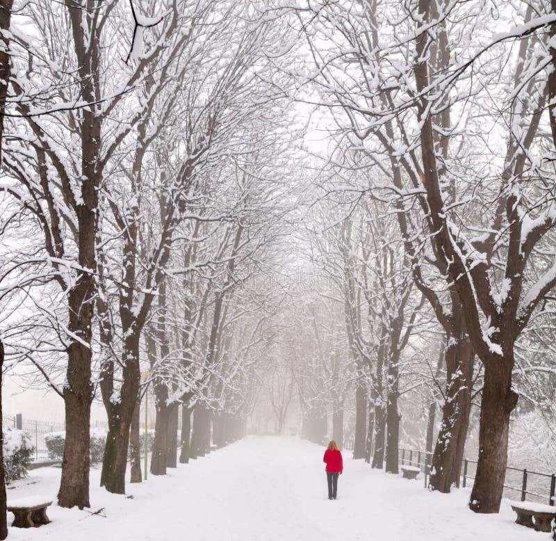 Signora che cammina in un boulevard innevato fotografia stock libera da diritti