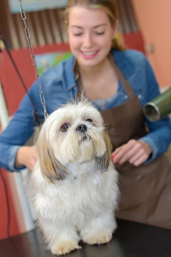 Signora che governa piccolo cane fotografia stock