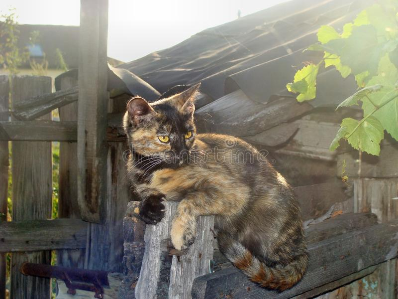 Signora-gatto fotografia stock libera da diritti