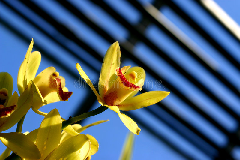 Download Signs Of Spring Royalty Free Stock Images - Image: 511939