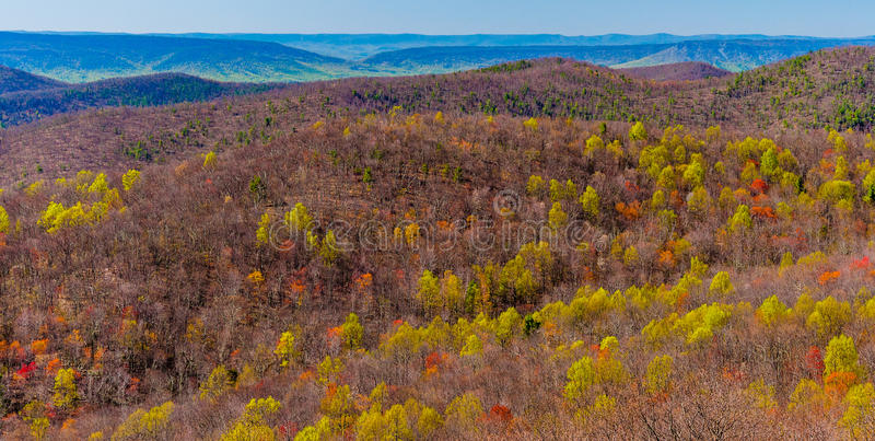 Signs of spring in the Blue Ridge, seen from Skyline Drive in Sh. Enandoah National Park, Virginia stock images