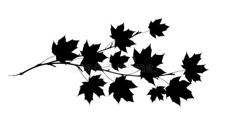 Sihlouette noir de brindille d'érable avec des feuilles illustration stock