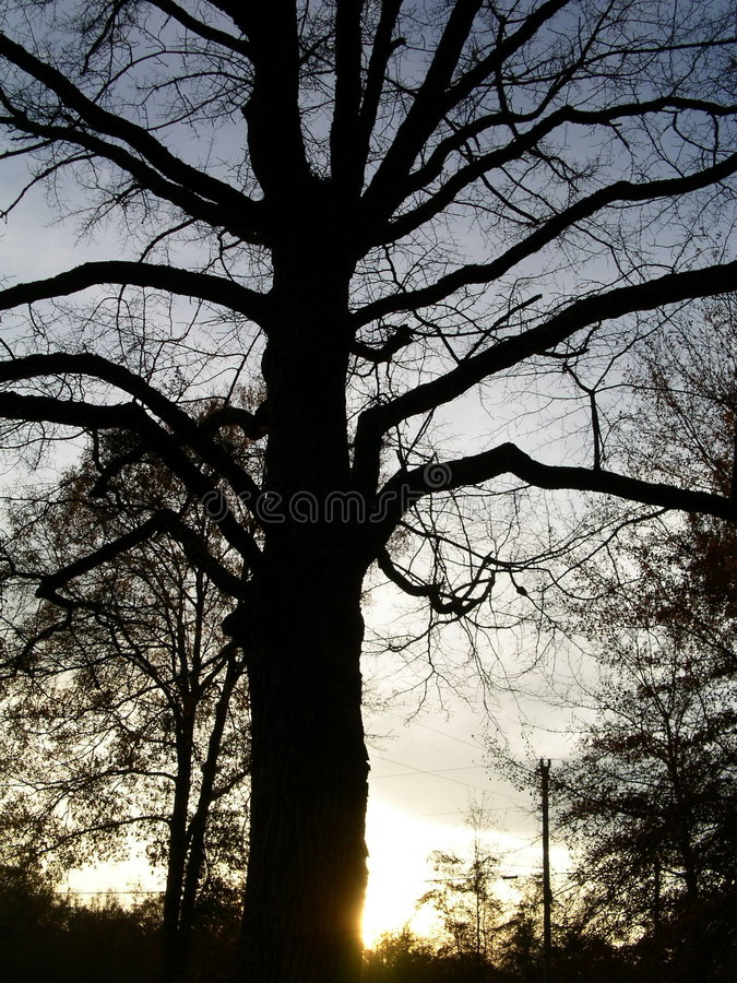 Sihouette结构树 库存照片