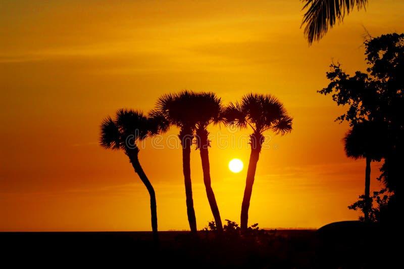 Sihouettes De La Palmera De La Florida Imagen de archivo libre de regalías
