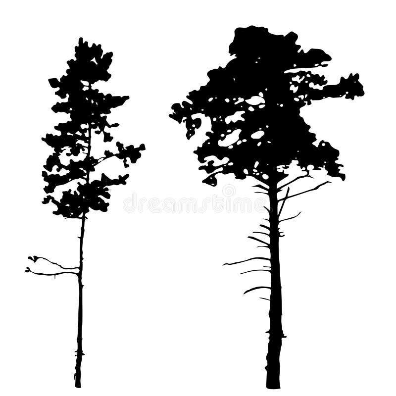Sihouettes dei pini immagini stock