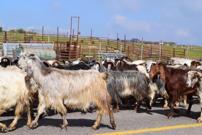Sijpelt in Mas ` ade, Golanhoogten, het noorden van Israël stock afbeeldingen