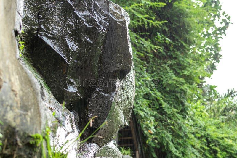 Siklawa głęboko w tropikalnym lesie tropikalnym Ubud, tropikalna Bali wyspa, Indonezja Egzotyczna scena zwrotniki fotografia royalty free