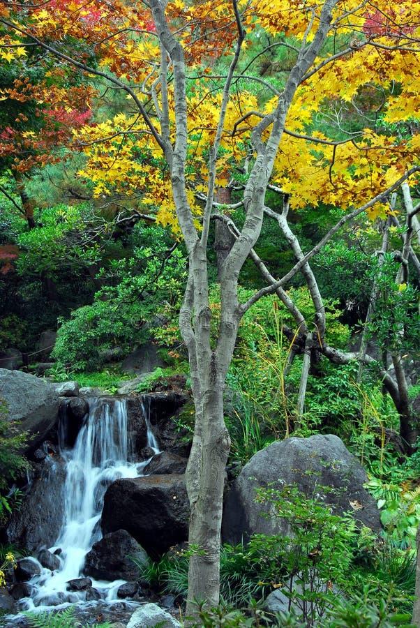 Siklawa i koloru żółtego drzewo obraz royalty free