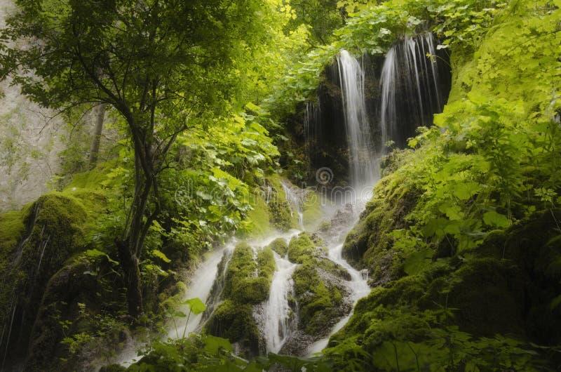 Siklawa i zwarta roślinność w zielonym lesie obraz stock