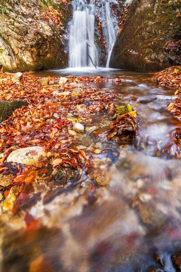 Siklawa na strumieniu w jesień lesie, park narodowy Mala Fatra obraz royalty free
