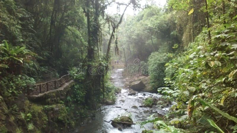 Siklawa park obrazy royalty free