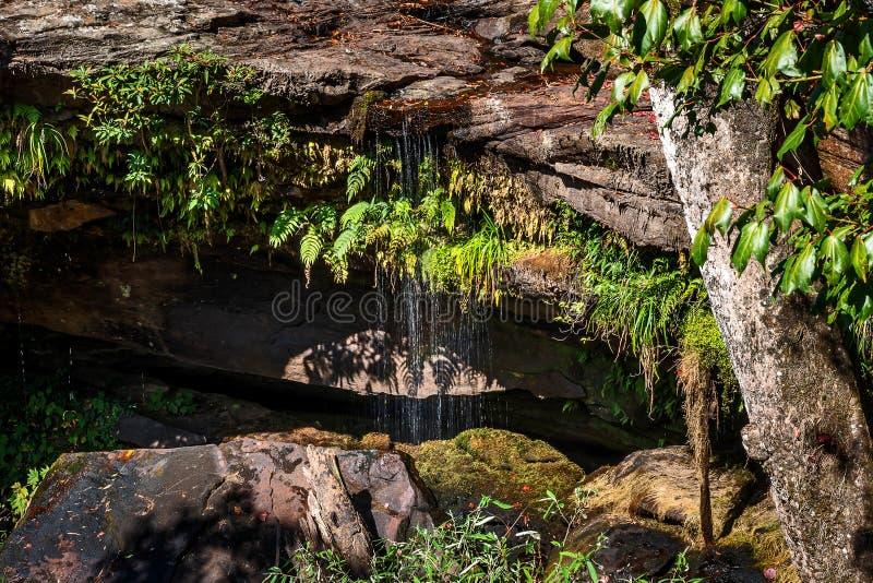Siklawa podczas pory suchej obrazy stock