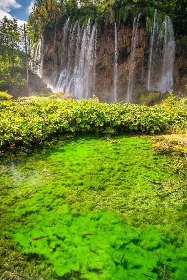 Siklawa przy jeziorem z rybami Plitvice jezior park narodowy obraz stock