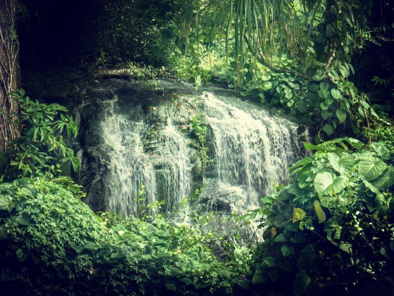 Siklawa w dżunglach Seychelles fotografia royalty free