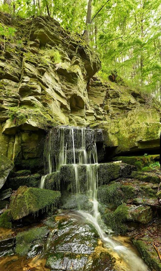 Siklawa w górach, skały w lasowym Ukraina Vertical landsc zdjęcia stock