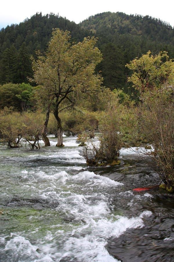 Siklawa w Jiuzhaigou parku narodowym zdjęcia stock