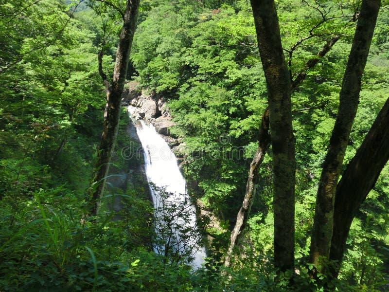 Siklawa w lesie fotografia royalty free