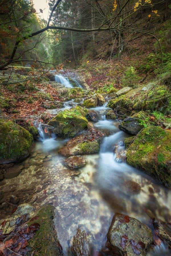 Siklawa w lesie Mala Fatra park narodowy fotografia stock