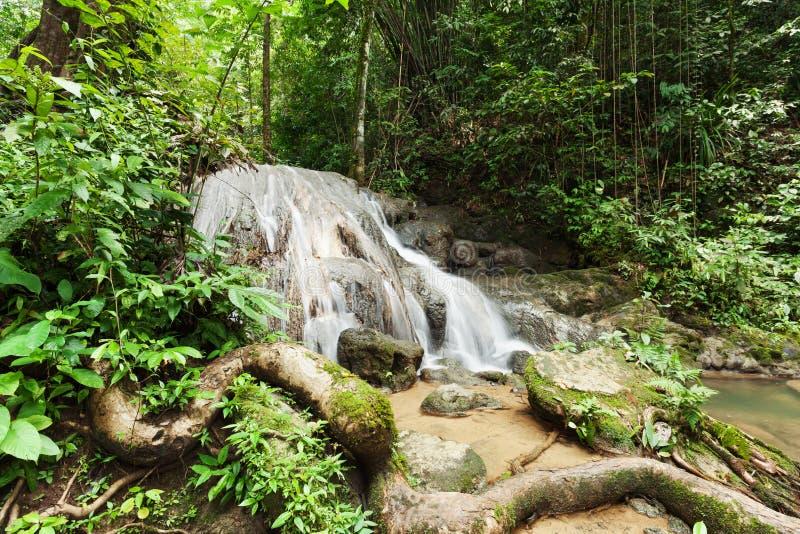 Siklawa w lesie tropikalnym obraz royalty free
