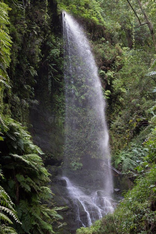 Siklawa w Los Tilos los angeles Palma, wyspy kanaryjska (,) fotografia royalty free