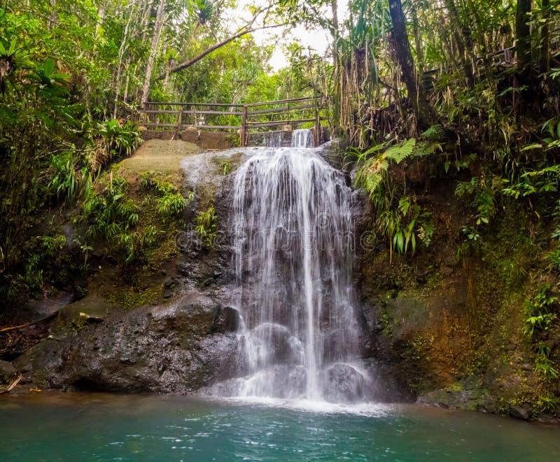 Siklawa w Suva lasu tropikalnego parku narodowym, rezerwat przyrody blisko Suva, Viti Levu wyspa, Fiji, Melanesia, Oceania fotografia royalty free