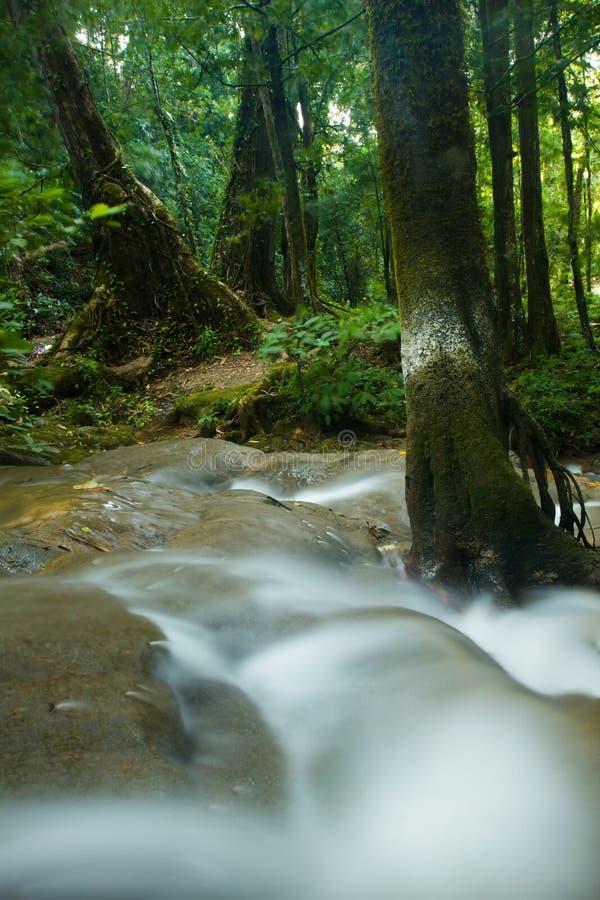 Siklawa w Tajlandia lesie obraz royalty free