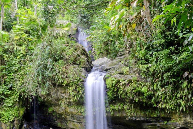 Siklawa w tropikalny las deszczowy fotografia royalty free
