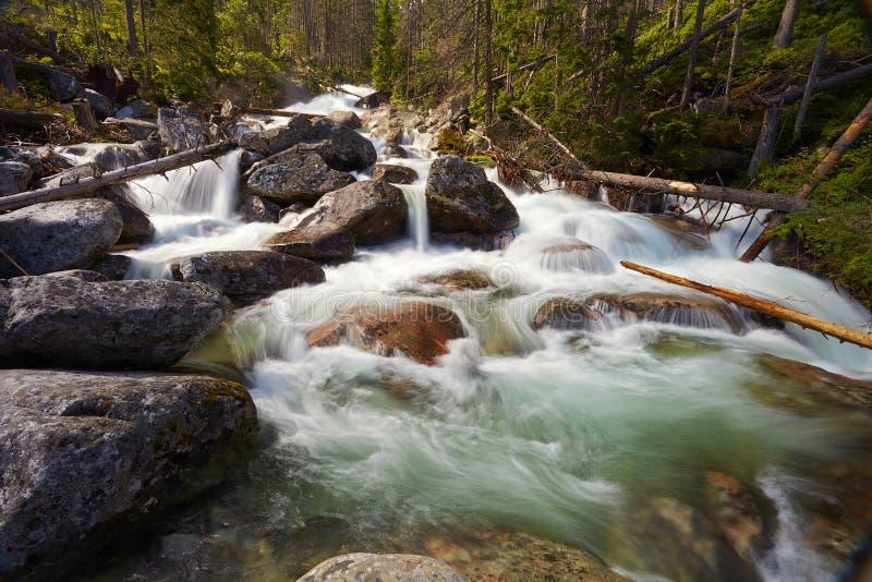 Siklawy i gwałtowni na rzece w lesie zdjęcia royalty free