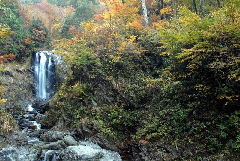 Siklawy jesieni ulistnienie obraz stock