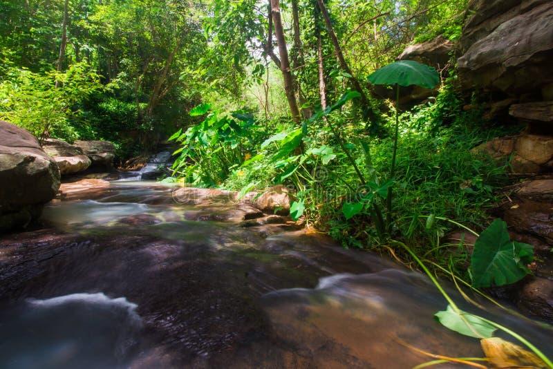 Siklawy płynie od lasu obrazy stock