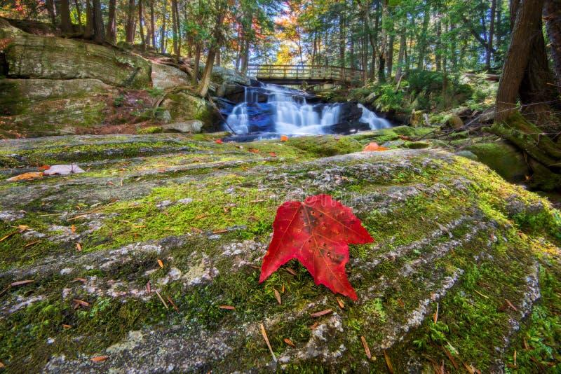 Siklawy tło z Czerwonym liściem klonowym na skale zdjęcia royalty free